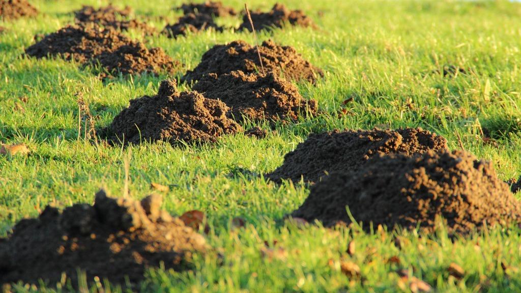 krtovi hribi na zemlji